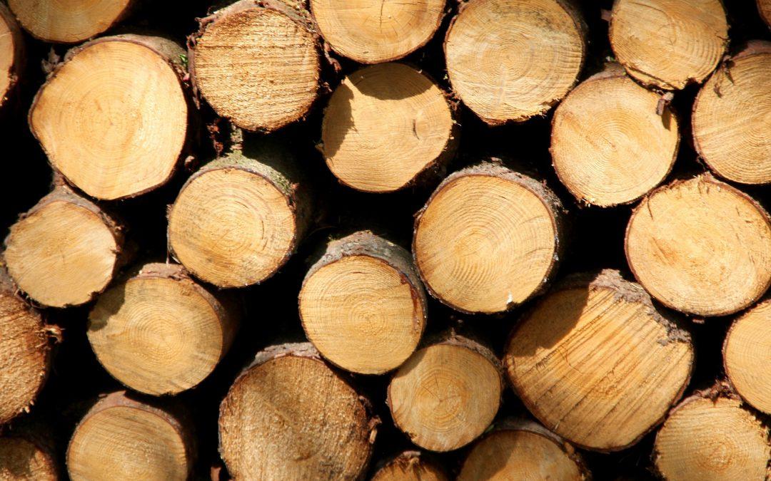 Holzmarkt in Kürze
